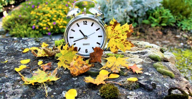 zegarek wśród jesiennych liści